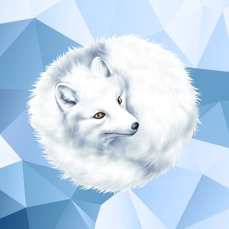 arctic-fox-thumb3