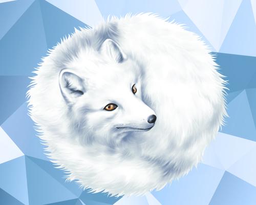 arctic-fox-thumb2